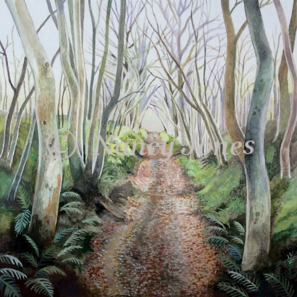 Bere Regis woodland path