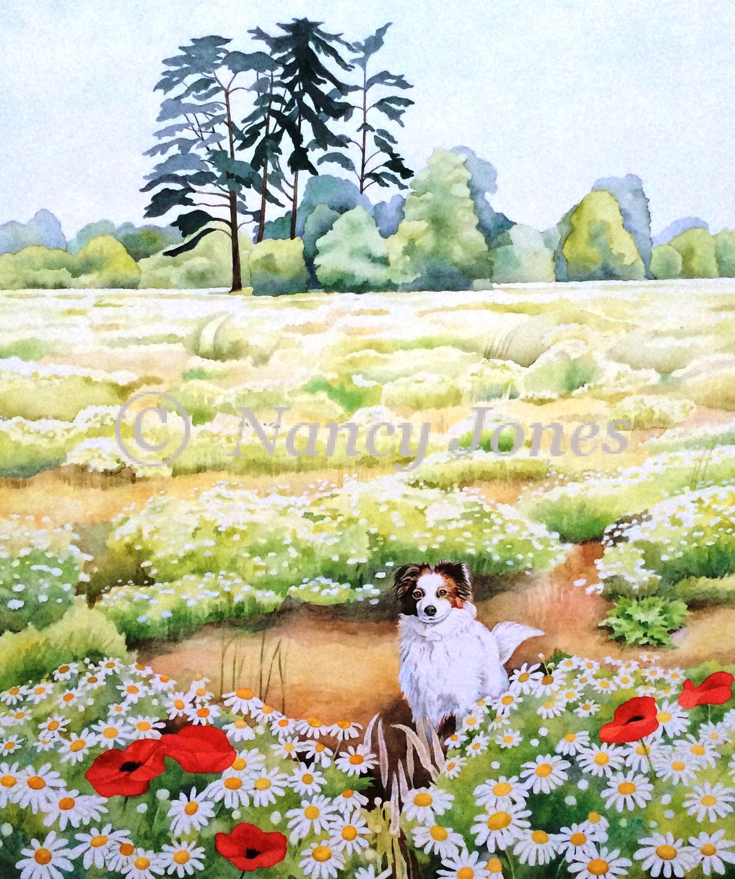 Willow and poppies